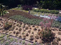 homeowners u0027 associations are not allowed to ban drought tolerant