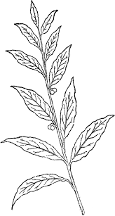hawaiian flower coloring pages coloring coloring pages flowers