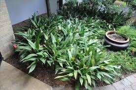 design u decors plant smart october plant common landscape plants