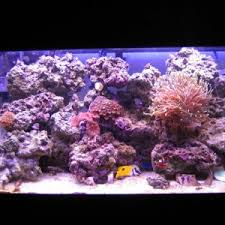 Reef Aquascape Designs Home Accessories Extraordinary Aquascape Designs For Modern Home