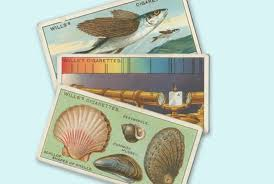 thanksgiving tidbits did you know 25 tidbits from vintage cigarette cards mental floss