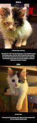 best 25 cat eye infection ideas on pinterest cat eye problems