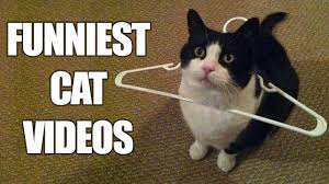 Cats In Small Spaces Video - funny cats compilation must see funny cat videos 2016 youtube