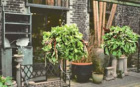 7 fruits and vegetables you can grow in hanging baskets rodale u0027s