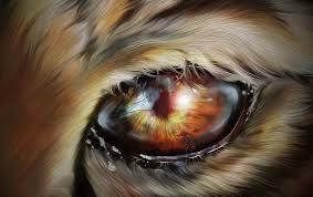 eye of tiger zoo free image on pixabay