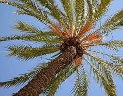 tree symbolism palm tree symbolism sun signs
