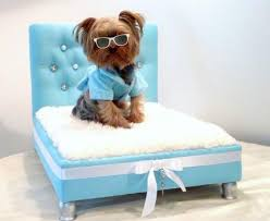 Modern Dog Furniture by Furniture Accessories Small Modern Pet Beds Bedesign Small White