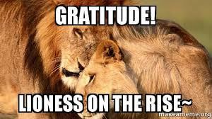 Gratitude Meme - gratitude lioness on the rise make a meme