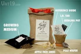 apple tree to be complete kit for growing your own apple tree