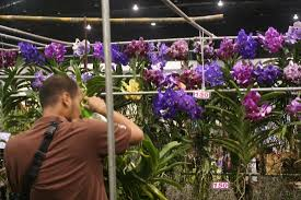 vanda orchids vanda orchids picture of chatuchak flower market bangkok