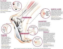 Foot Anatomy Nerves Topics Feet