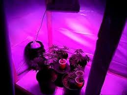 1000 watt led grow light reviews led grow light 300w 1st review youtube