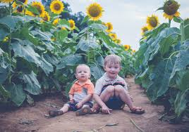 Grinter Farms Roark U0026 Trowbridge Sunflower Mini Session Lawrence Ks