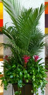 23 best house plants images on pinterest indoor gardening