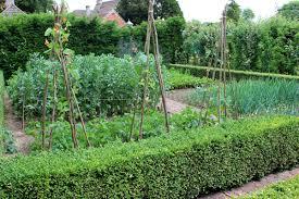 incredible ideas make your garden trellis stand apart