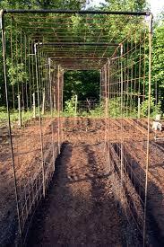 Trellis Poles Vegetable Garden Design Diy Bean Trellis Vegetable Garden