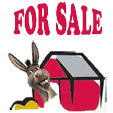 mediterranean miniature donkeys for sale