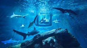 aquarium halloween inside the shark suite airbnb u0027s first underwater hotel room