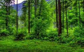 forest images forest backgrounds for desktop 33 handpicked