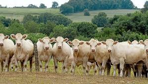 chambre agriculture loire pays de la loire 25 000 fermes et une seule chambre d agriculture