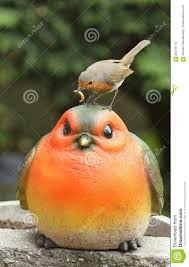 a robin erithacus rubecula sitting on the of a large robin