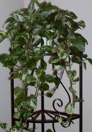 Indoor Vine Plant Helping Houseplants This Winter Daily Dish W Foodie Friends Friday