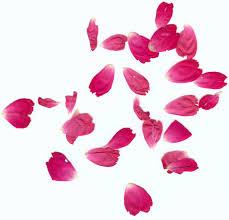 flower petals flower flower petals