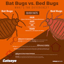 Massachusetts how do bed bugs travel images Bat bugs vs bed bugs what 39 s the difference catseye pest control jpg