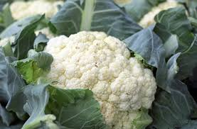 cauliflower planting growing and harvesting cauliflower plants