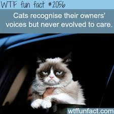 Cat Facts Meme - cats recognize their owner s voice when i say breakfast time