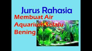 membuat aquascape bening membuat air aquarium sebening kristal youtube