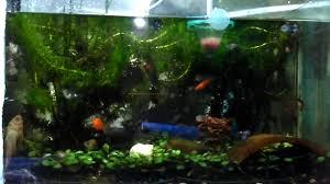 membuat aquascape bening air aquarium tetap bening tanpa di kuras youtube