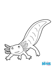 mexican salamander coloring pages hellokids com