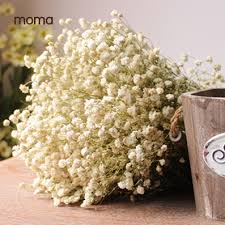 baby s breath wholesale starry real flowers dried flower preservation groceries window