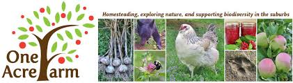 Keeping Free Range Chickens In Your Backyard Limited Free Range Chickens 12 Tips To Balance Freedom U0026 Safety