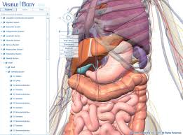 Picture Diagram Of The Human Body Human Anatomy Human Body Anatomy This Diagram Of The Human Body