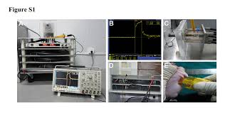 nanosecond pulsed electric field inhibits cancer growth followed