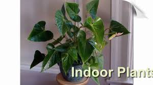 Office Plants Interior Office Plants We Make Your Workspace Green Youtube