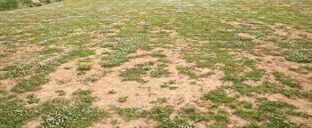 sandy ground partially covered with grass ground textures