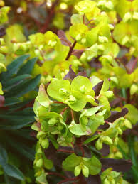plant talk green flowers