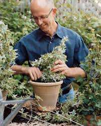 Garden Topiary Wire Forms How To Make Ivy Topiaries Martha Stewart