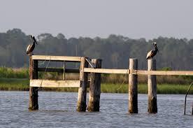 Alabama wildlife tours images Tours of mobile bay usa today jpg