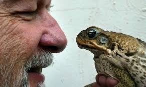 How To Get Rid Of Cane Toads In Backyard War On Cane Toads Sutherland Shire Council U0027s 60k Commitment To