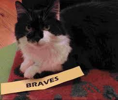 cats the baseball bloggess