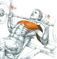 Shoulder Pain In Bench Press How To Train With Shoulder Pain Development Exercises Myprotein