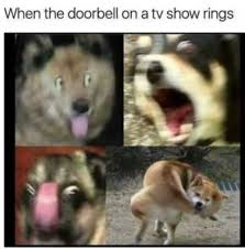 French Bulldog Meme - when the doorbell on a tv show rings dogo argentino french