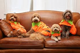 More Consumers Are Purchasing Pet Costumes For Halloween Than Ever