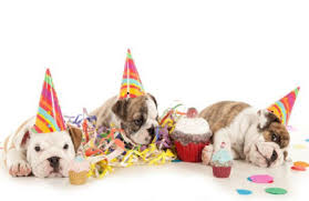 dog birthday party the dog stop the big birthday bash a dogust celebration