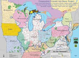 emerald ash borer map can the emerald ash borer really be stopped newscut minnesota