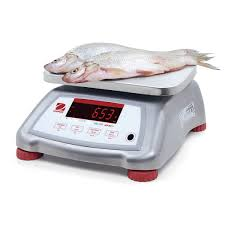 platform scale benchtop with lcd display stainless steel